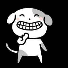 Cute Dog5