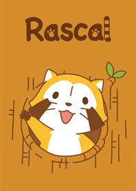 RASCAL แรคคูนน้อย