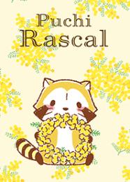 Rascal☆ดอกมิโมซ่า